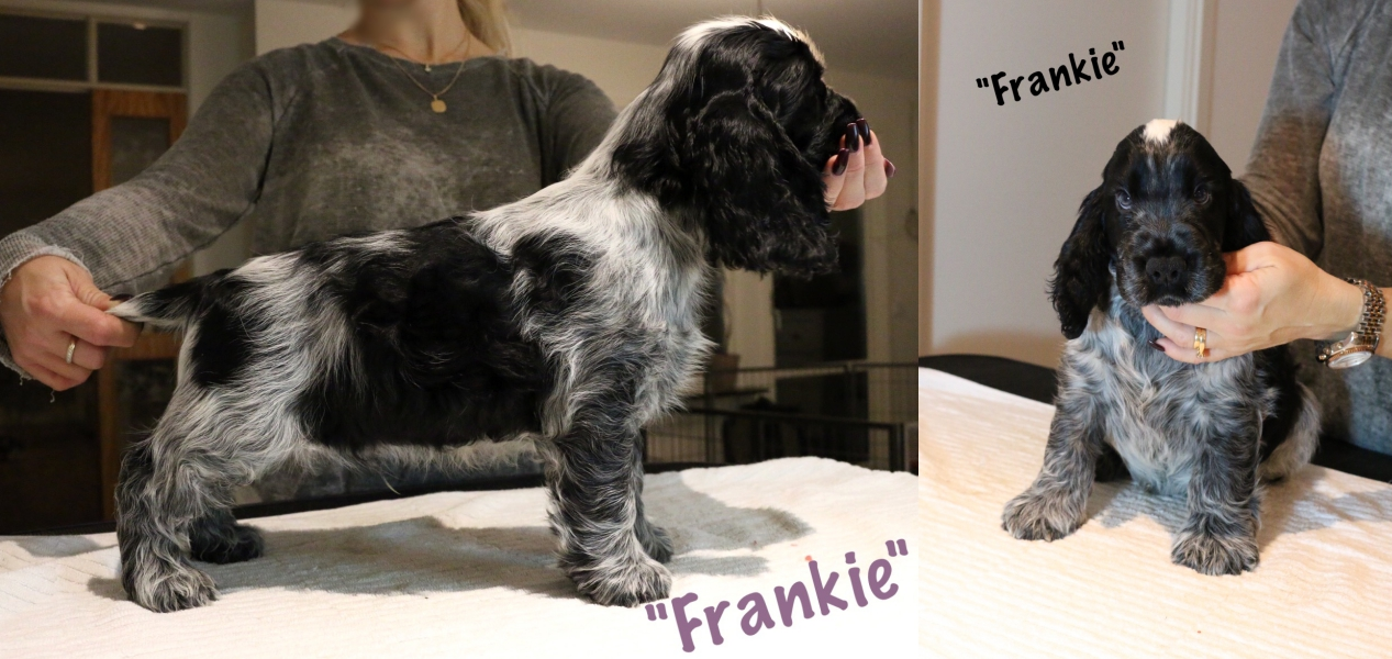 frankie-8-veckor