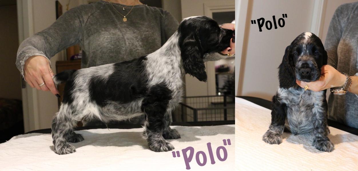 polo-8-veckor